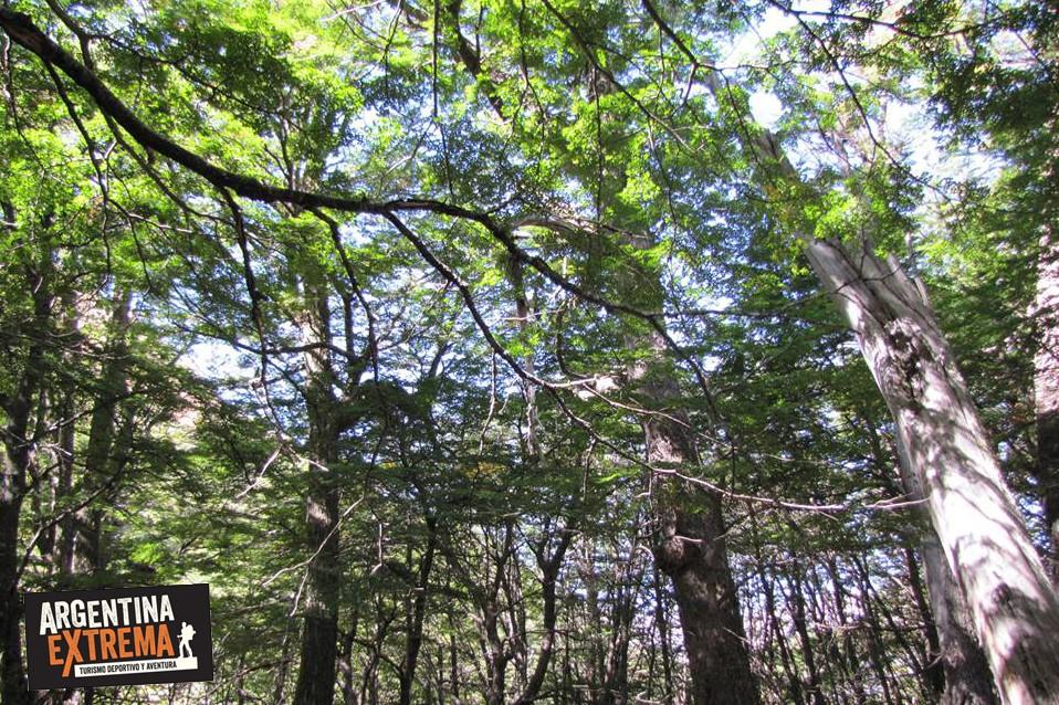 bosques bariloche