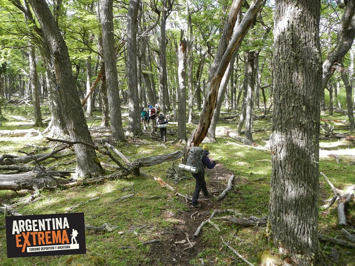 ramas bosque trekking senderismo Patagonia