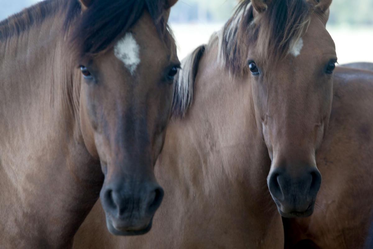 argentina estancia caballos
