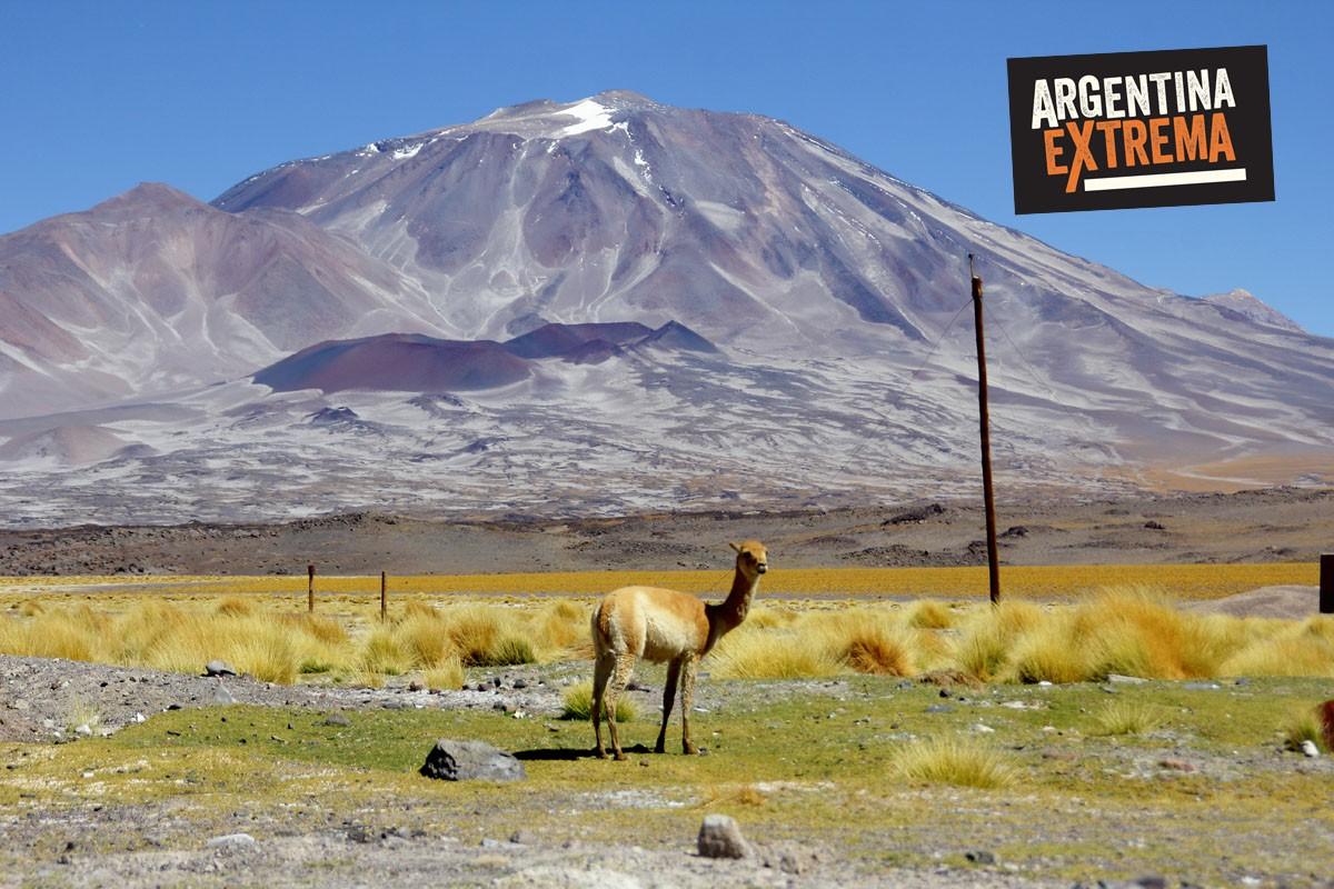 Guanaco posando frente al Inca Huasi