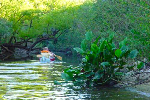 aurora del palmar entre rios 07.JPG
