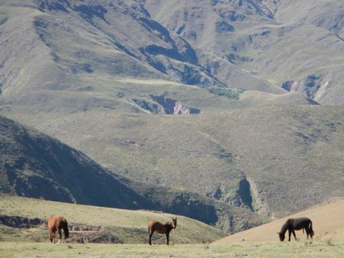 champaqui caballos sierras