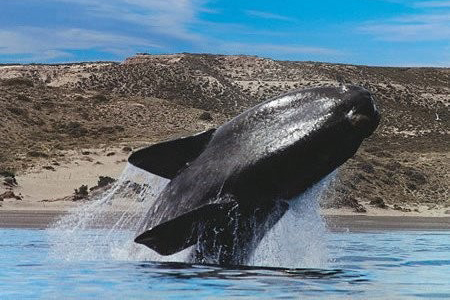 fotosafari avistajes de ballenas peninsula valdes puerto madryn 2
