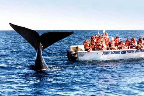 fotosafari avistajes de ballenas peninsula valdes puerto madryn 6