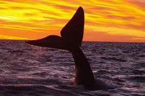 fotosafari avistajes de ballenas peninsula valdes puerto madryn 7