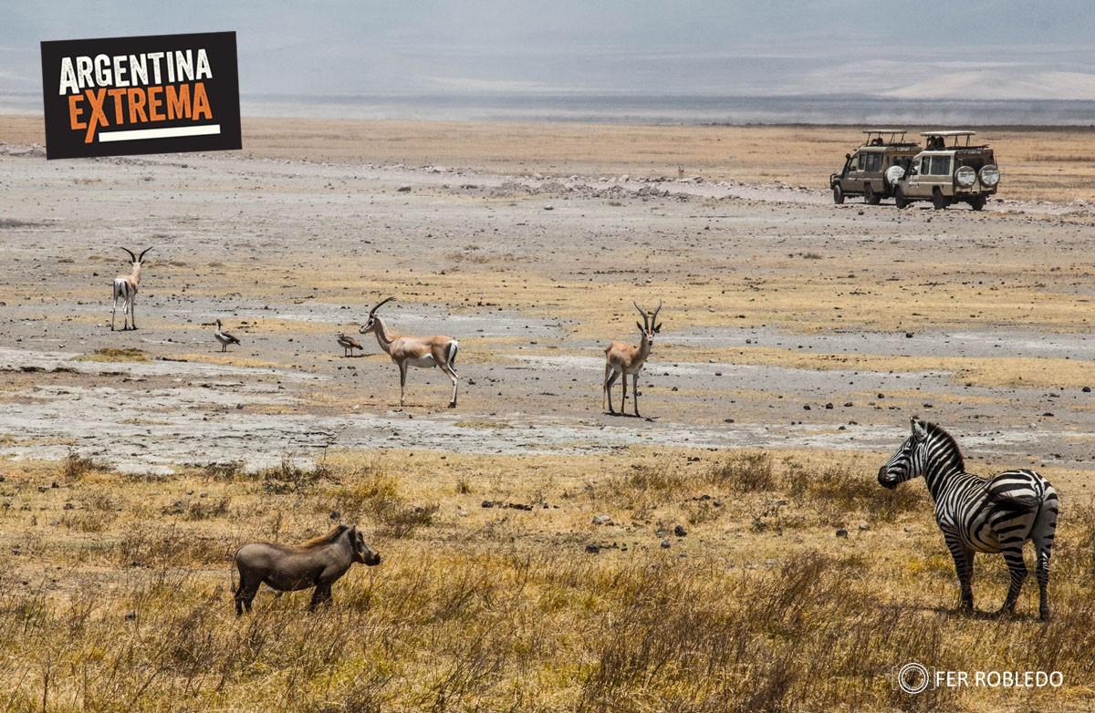 fotosafari serengeti ngorongoro manyara africa 130