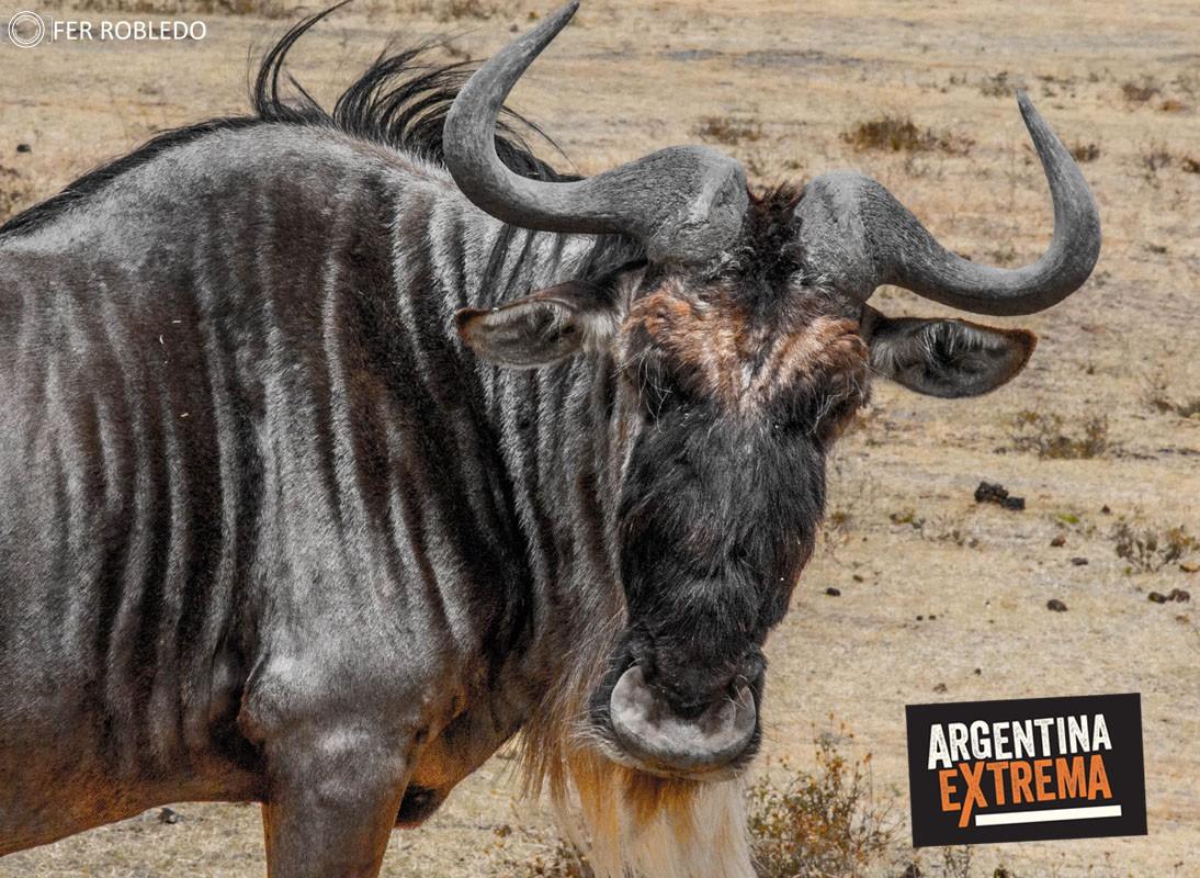 fotosafari serengeti ngorongoro manyara africa 159