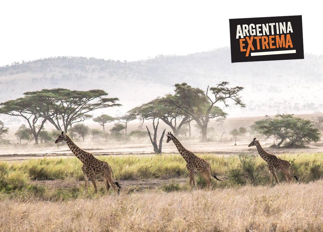 fotosafari serengeti ngorongoro manyara africa 187