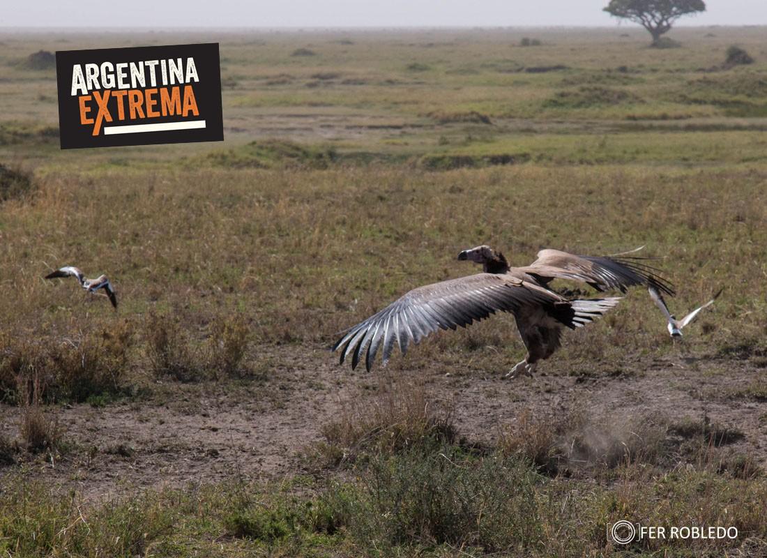 fotosafari serengeti ngorongoro manyara africa 478