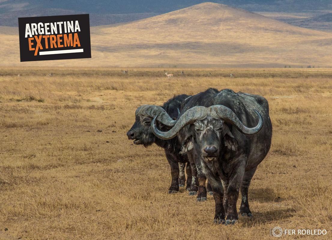 fotosafari serengeti ngorongoro manyara africa 496