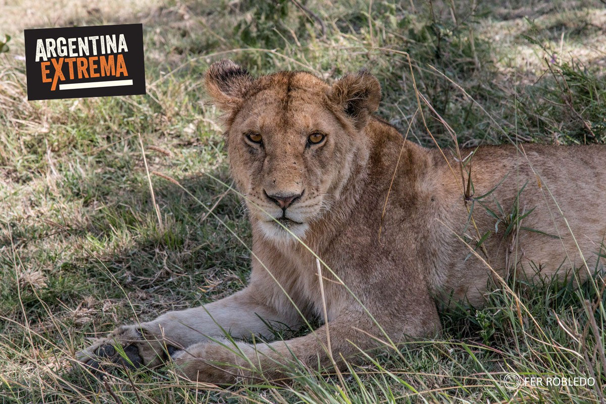 fotosafari serengeti ngorongoro manyara africa 515