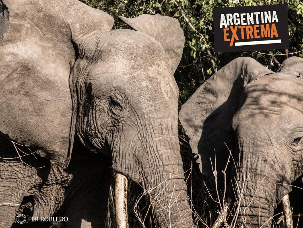 fotosafari serengeti ngorongoro manyara africa 552