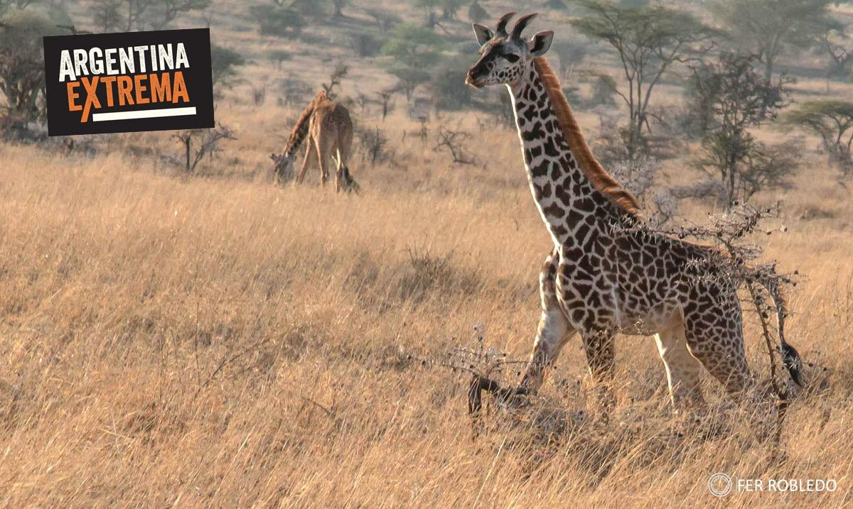 fotosafari serengeti ngorongoro manyara africa 593