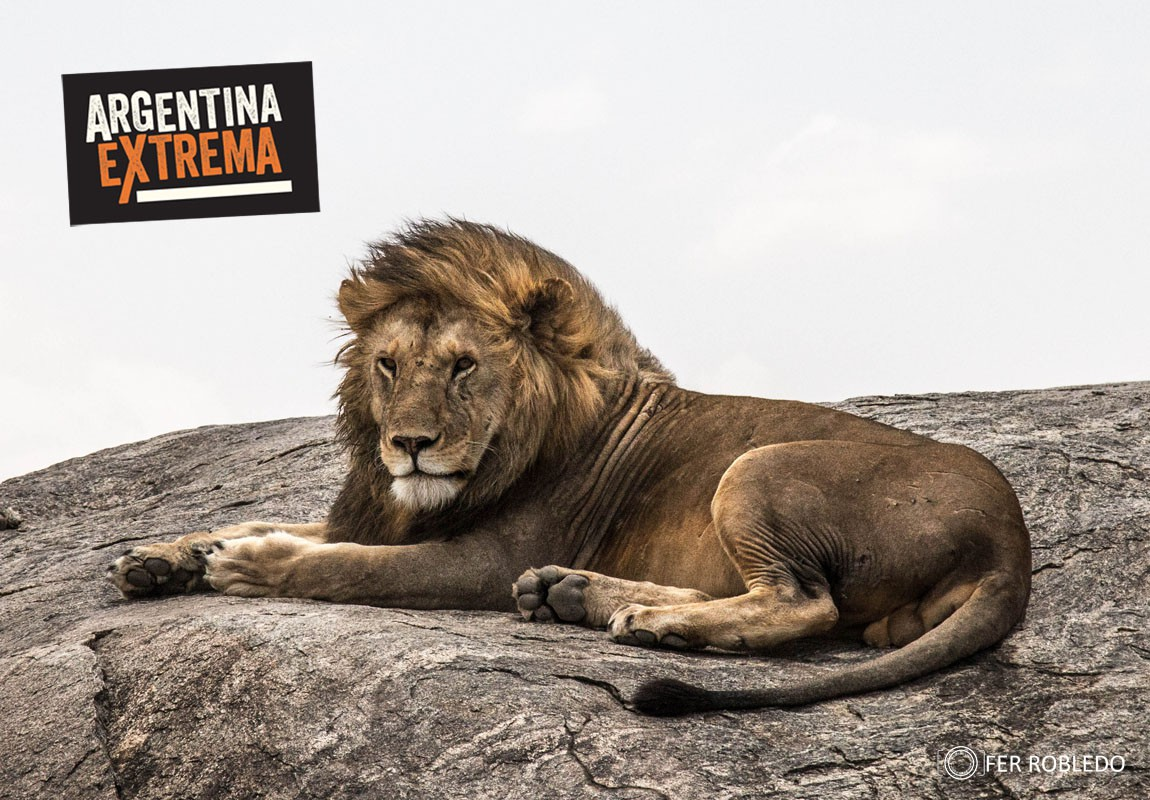 fotosafari serengeti ngorongoro manyara africa 698