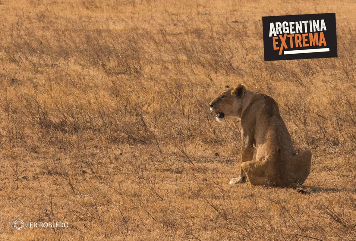 fotosafari serengeti ngorongoro manyara africa 900