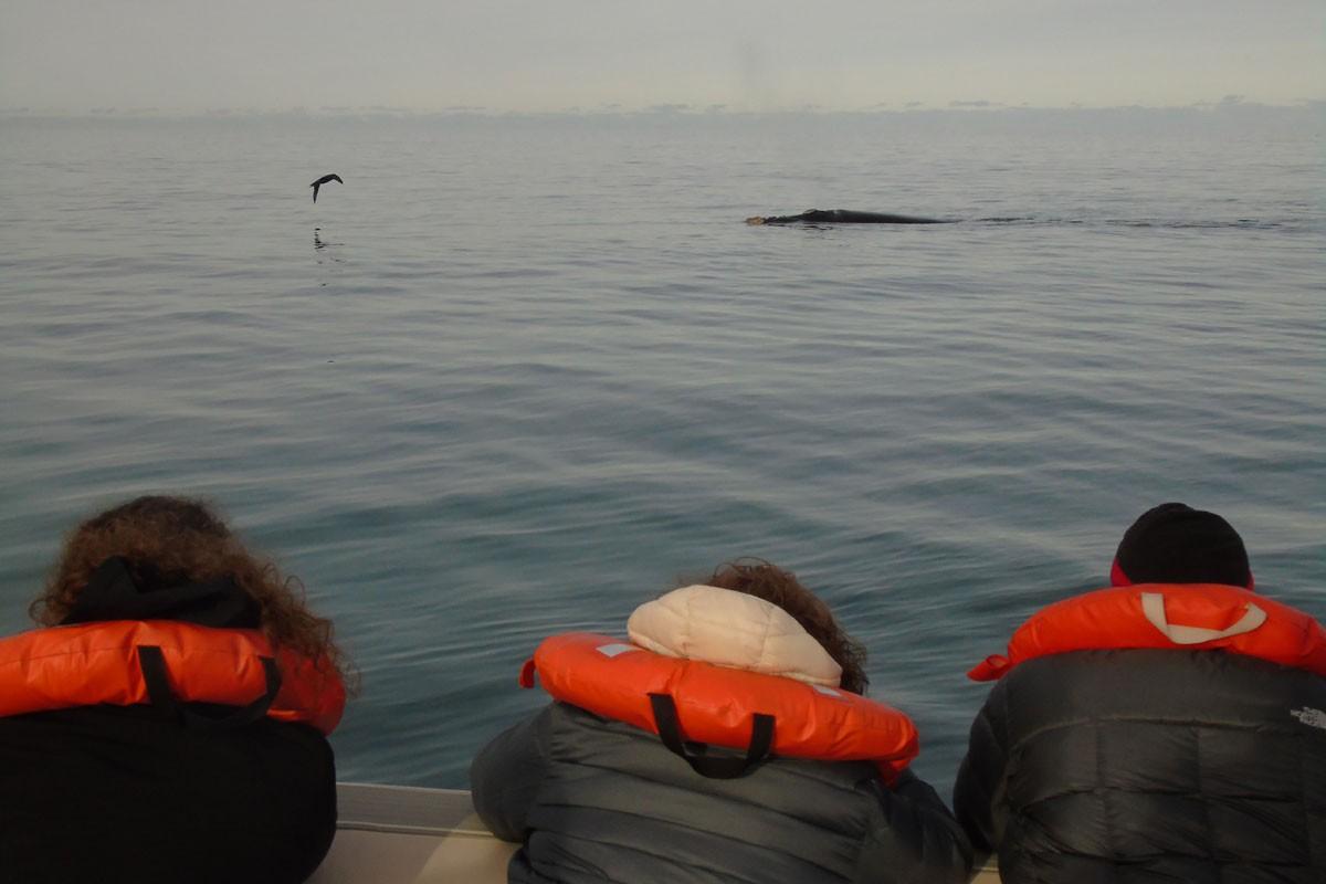 fotosafari y aventura en puerto madryn y peninsula valdes373