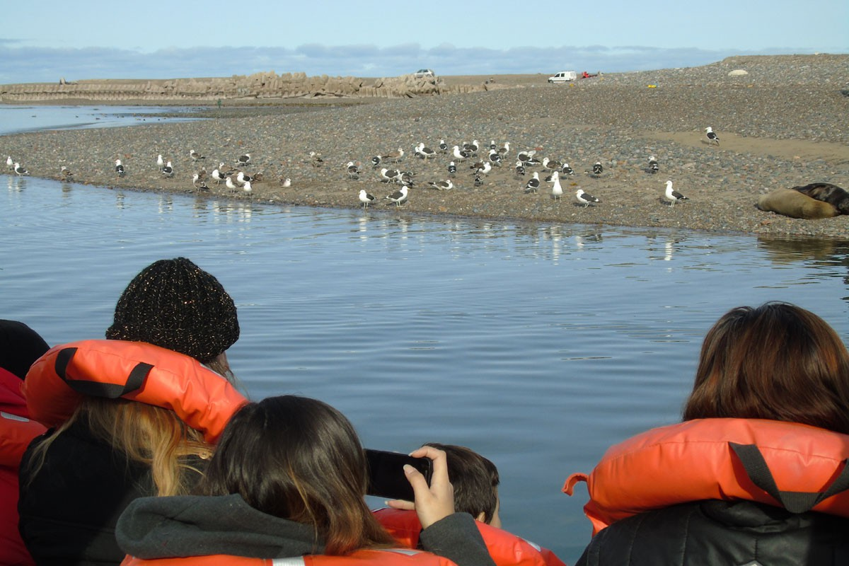 fotosafari y aventura en puerto madryn y peninsula valdes904