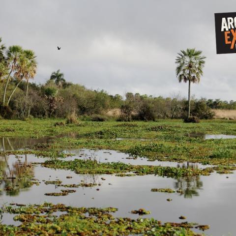 Multi-adventure and photosafari at the Esteros del Ibera - Corrientes