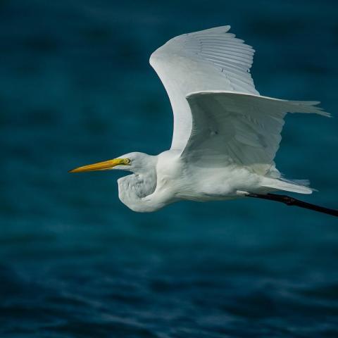 Taller de Iniciación a la Observación de Aves - Avistajes - Buenos Aires