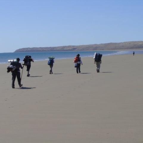 Trekking con avistajes de ballenas - Península Valdés, Puerto Madryn, Punta Tombo - Punta Ninfas