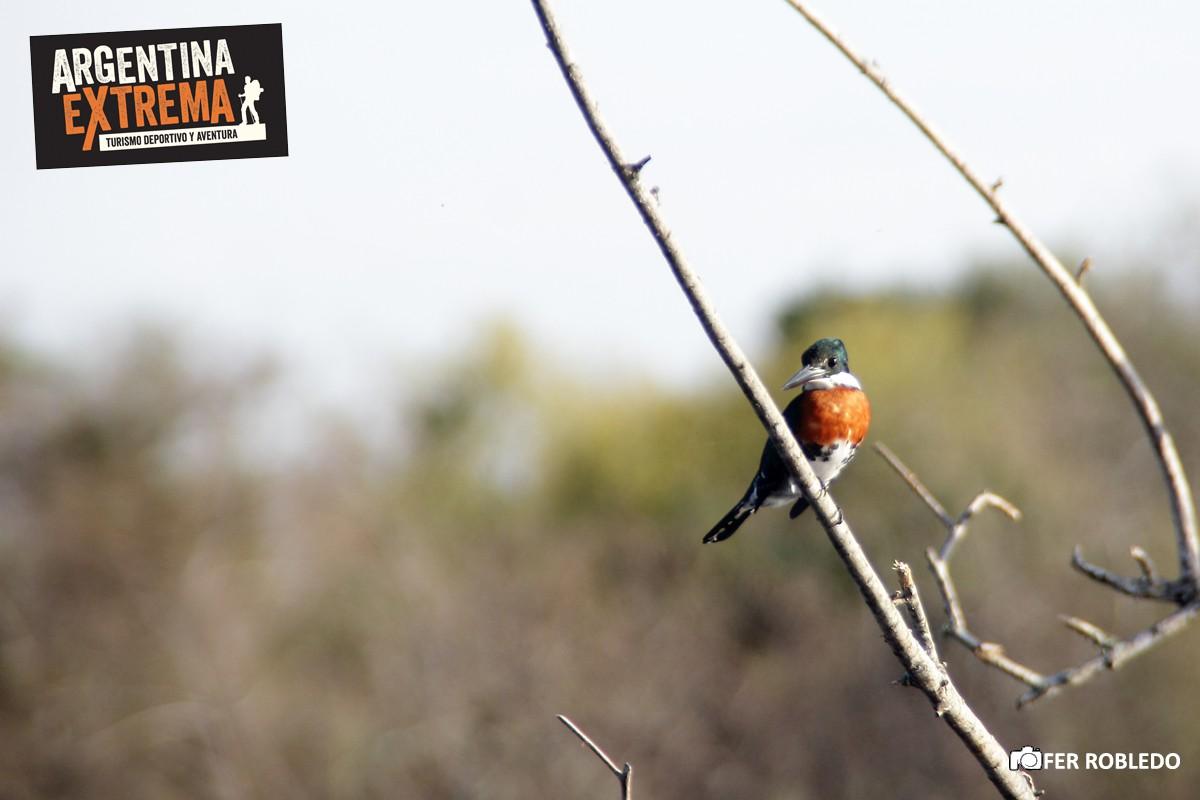 iniciacion a la observacion de aves 281