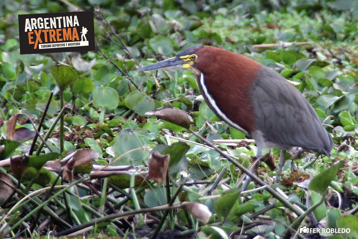 iniciacion a la observacion de aves 485