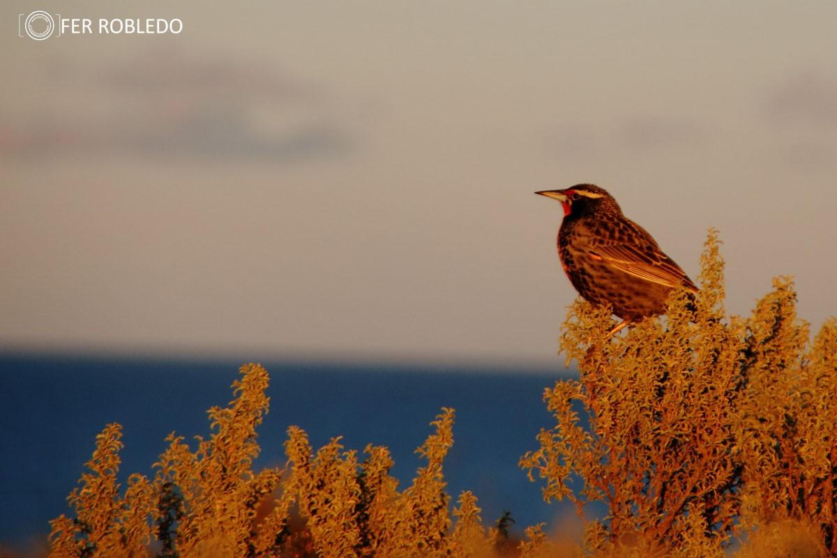 iniciacion a la observacion de aves 898