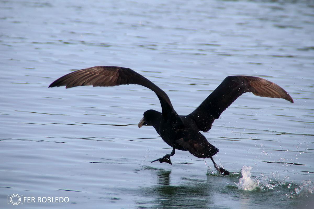 iniciacion a la observacion de aves 985