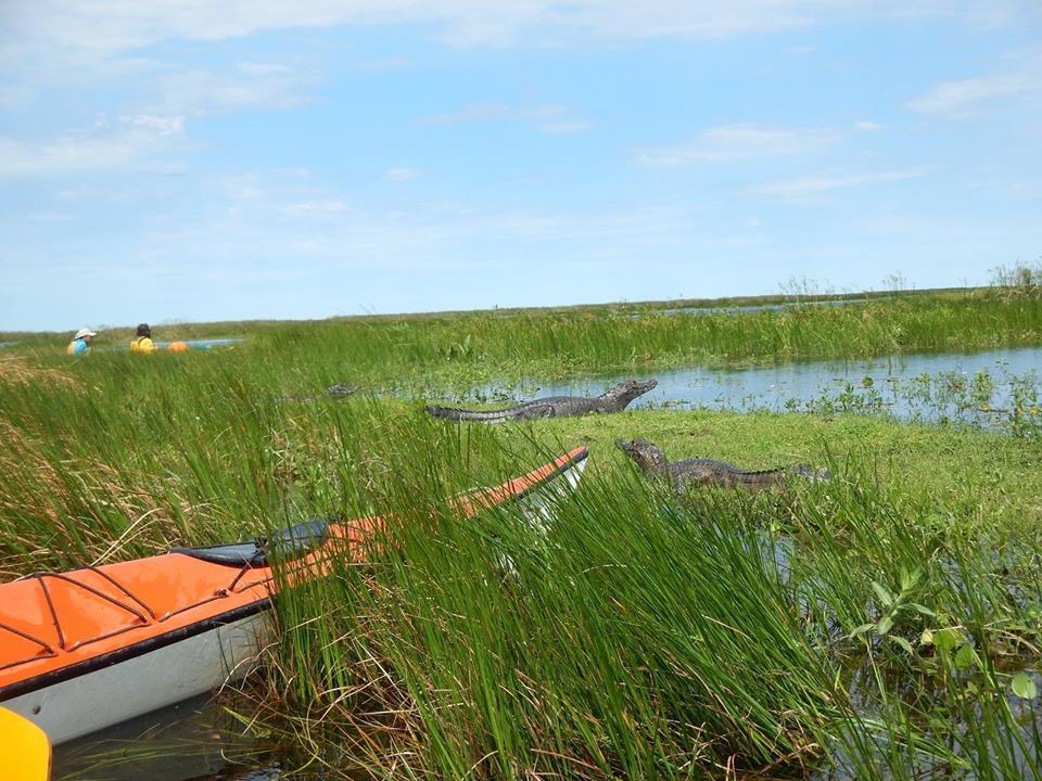 kayaking de travesia por los esteros del ibera570