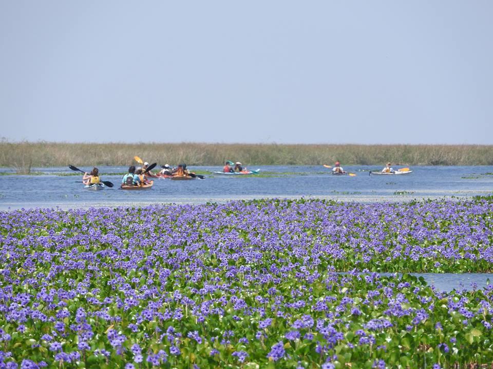 kayaking de travesia por los esteros del ibera580