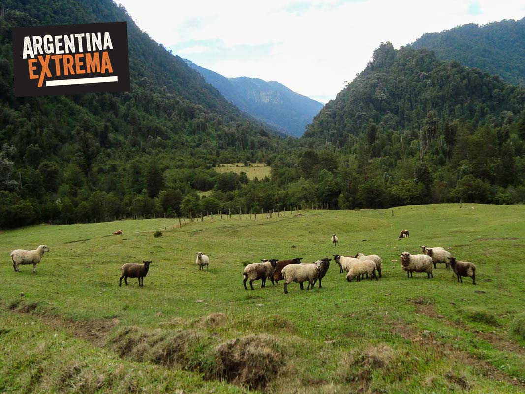 trekking cruce de los andes pampa linda arg a ralun chile 898