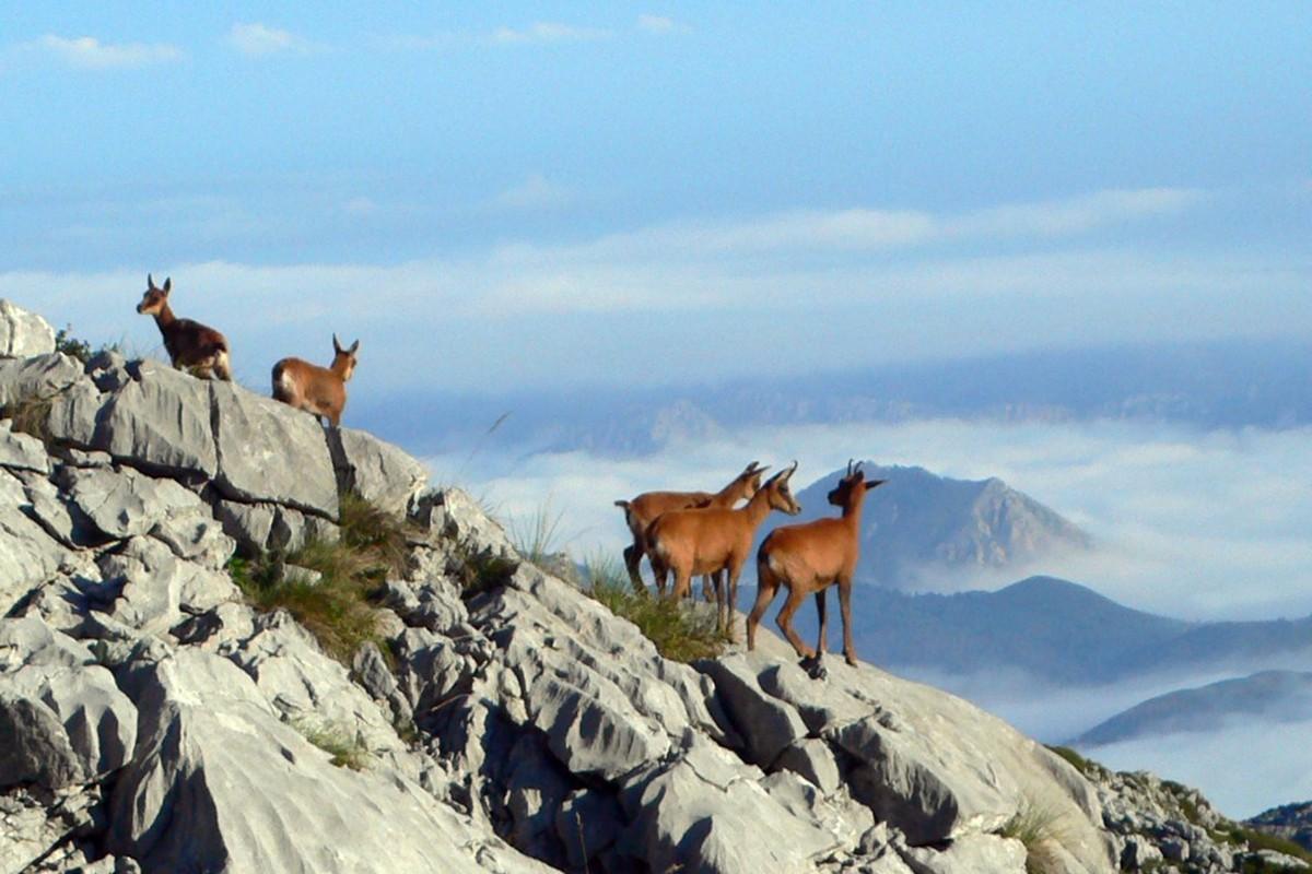 trekking picos europa argentinaextrema 017