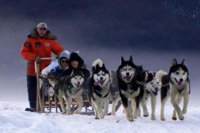 trinero con perros grupal ushuaia aex